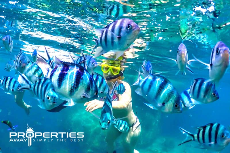 properties away koh samui water sport snorkeling